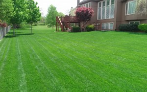 lawn care company kansas city example of our service07
