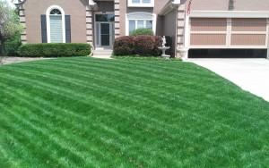 lawn care company kansas city example of our service12