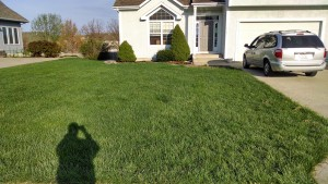 lawn care service kansas city example of our service03