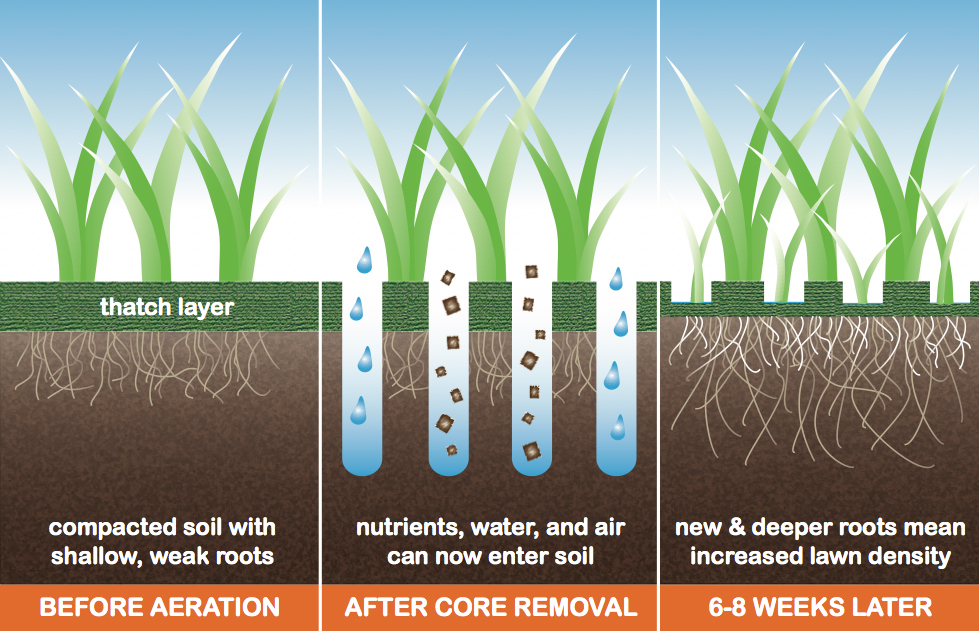 Aeration and Seeding: Why It's Necessary